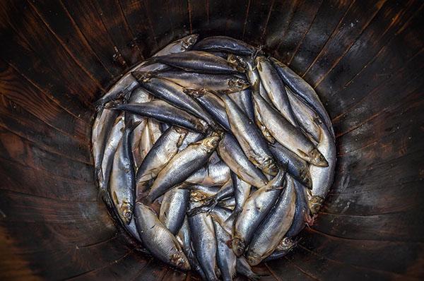 Fish barrel